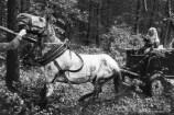 Ref AILLEURS 21 – Le cheval fourbu. Forêt de Psemysch, Pologne