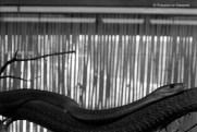 Ref ANX MAGIQUES 15 – Serpent, zoo de Madrid, Espagne