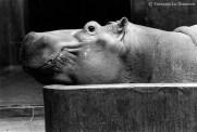 Ref ANX MAGIQUES 2 – Hippopotame, zoo de Vincennes, Paris, France