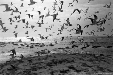 Ref ANX MAGIQUES 21 – Mouettes volant au-dessus la mer, Key West, Floride, USA