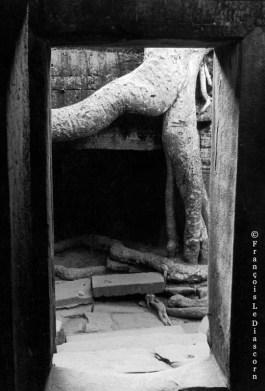 Ref ARBRES 11 – Arbre-homme, Temple de Ta Prohm, Angkor, Cambodge