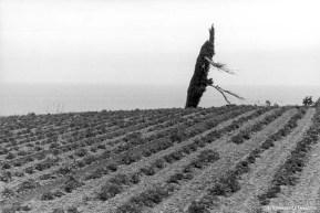 Ref ARBRES 13 – Arbre mort près de Cancale, France