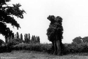 Ref ARBRES 14 – Arbre-animal, bocage près de Montluçon, France