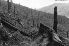 Ref ARBRES 15 – Forêt incendiée. Yachats, Oregon, USA