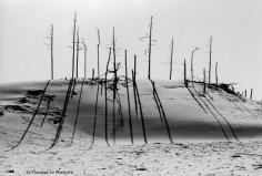 Ref ARBRES 17 – Dunes National Monument à Florence, Oregon, USA
