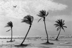 Ref ARBRES 2 – Palmiers, Key West, Floride, Etats-Unis