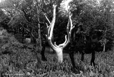Ref ARBRES 21 – Arbre doré, forêt de Brocéliande, France