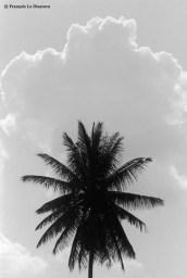 Ref ARBRES 22 – Palmier et nuage, Inde