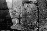 Ref ARBRES 25 – Arbre mort, Bruges, Belgique