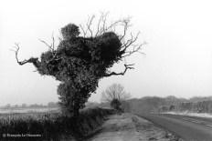 Ref ARBRES 3 – Arbre mort recouvert de lierre, Portsmouth, Grande-Bretagne
