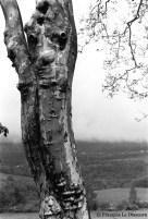 Ref ARBRES 7 – Arbre à forme humaine, près de Gap, France
