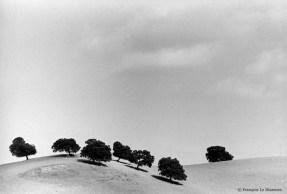 Ref ARBRES 9 – Chênes-liège, Estremadure, Espagne