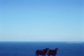 REF GRECE BLEUE 17 – 2 ânes, île de Folegandros
