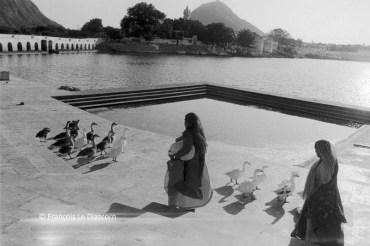 Ref Inde 17 – Femmes avec canards, Pushkar, Rajasthan, Inde