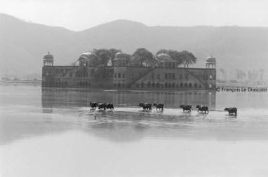 Ref Inde 4 – Palais du lac, Jaipur