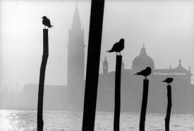 Ref VENISE 16 – Pigeons sur des piliers devant l'église San Giorgio Maggiore