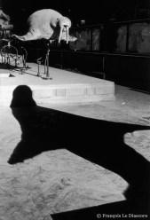 Ref Zoo 10 – Morse et son ombre