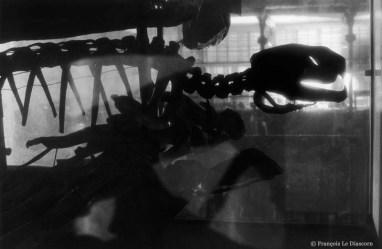 Ref Zoo 11 – Squelette de tortue luth