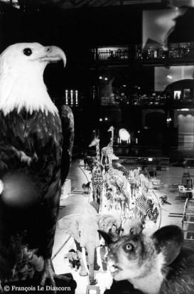Ref Zoo 13 – Aigle royal et aye-aye devant la caravane des animaux