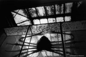 Ref Zoo 15 – Araignée géante du Japon sous la verrière des combles