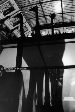Ref Zoo 16 – Silhouettes et ombres des girafes dans la Grande Galerie