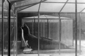 Ref Zoo 18 – Eléphant de mer dans sa cage de verre