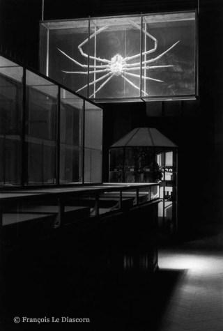 Ref Zoo 19 – Araignée géante du Japon sous les combles de la galerie