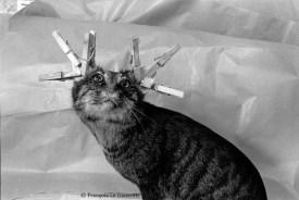 Ref Zoo 24 – Un chat empaillé avec pinces sur les oreilles
