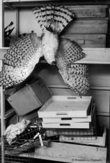 Ref Zoo 25 – Oiseau tête en bas, dans une salle abandonnée