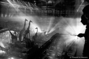 Ref Zoo 4 – La grande nef de la galerie pendant un spectacle son et lumière