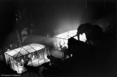 Ref Zoo 6 – Eléphants, rhinocéros et cerfs devant des cages de verre illuminées