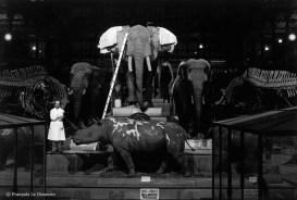 Ref Zoo 8 – Nef de la galerie avec le taxidermiste M. André Sarrazin