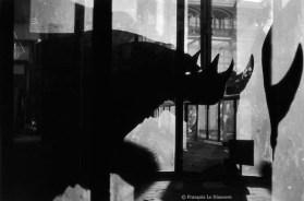 Ref Zoo 9 – Rhinocéros et son ombre