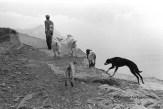 Ref Grèce 11 – Homme avec chien et chèvres, île de Karpathos
