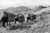 Ref Grèce 12 – Homme avec trois ânes, île de Karpathos