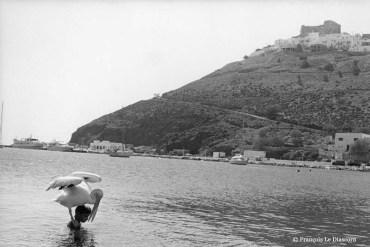 Ref Grèce 14 – Garçon et pélican, île d'Astypalea