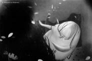 Ref CREATURES 19 – Le Dugong, aquarium de Toba, Japon